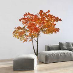 Reuze muursticker Orange Tree