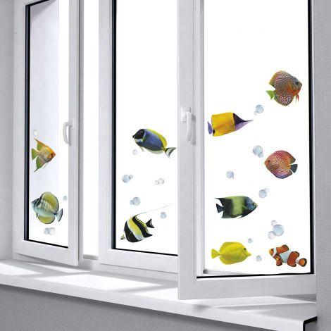 Raamsticker Fishes